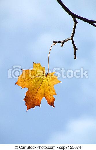Last Leaf of Autumn - csp7155074