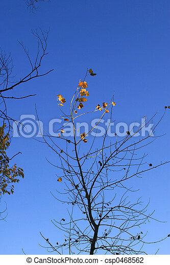 Last Leaves - csp0468562
