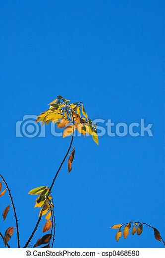 Last Leaves - csp0468590