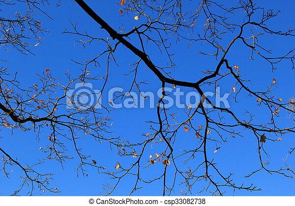 Last of Fall leaves - csp33082738