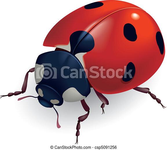 (lat., ladybug., coccinellidae) - csp5091256