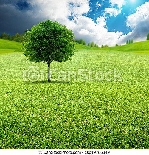lato, łąka, naturalne piękno, zielony, dzień, krajobraz - csp19786349