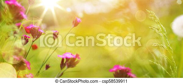 lato, trawa, sztuka, wiosna, abstrakcyjny, tło, świeże kwiecie, albo - csp58539911