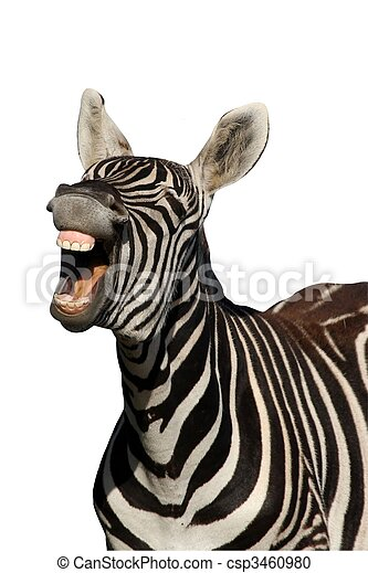 Laughing Zebra - Isolated - csp3460980