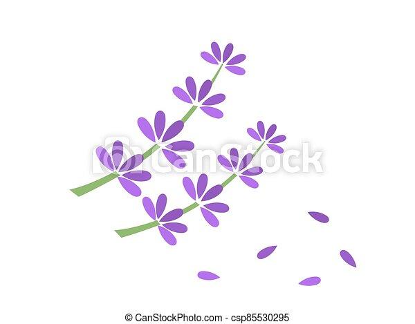 lavanda, flores, símbolo. - csp85530295