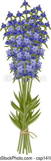 Lavender - csp14182729