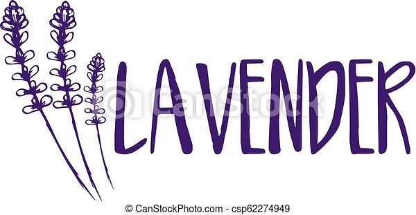 lavender., abstrakt, illustration, vektor, design, mall, logo, ikon - csp62274949