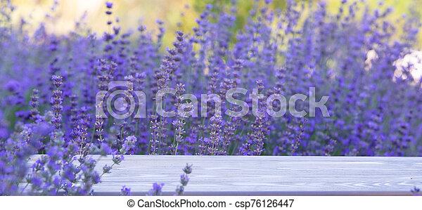 Lavender bushes closeup on sunset. Sunset gleam over purple flowers of lavender. Provence region of france - csp76126447
