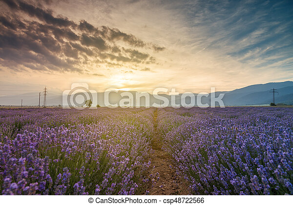 Lavender fields. Beautiful image of lavender field - csp48722566