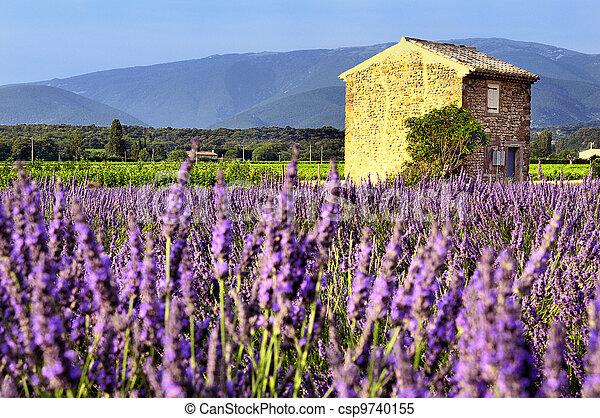 Lavender in the landscape - csp9740155