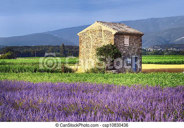 Lavender in the landscape - csp10830436
