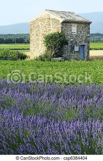 Lavender - csp6384404
