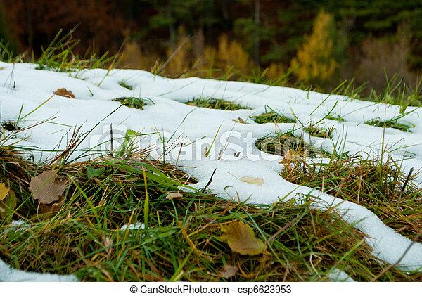 lawn in autumn - csp6623953
