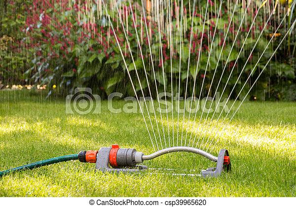 Lawn sprinkler - csp39965620
