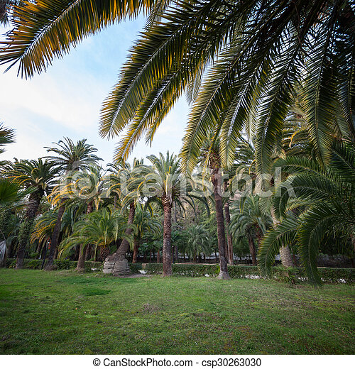 Lawn surrounded by palm trees - csp30263030
