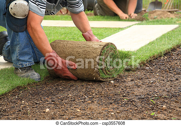 Laying sod for new lawn - csp3557608
