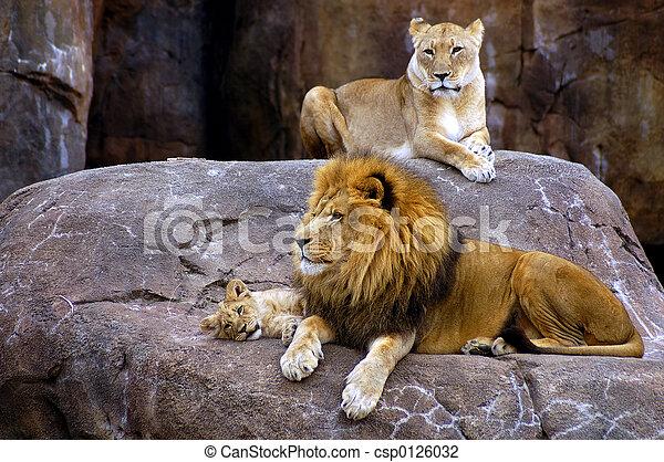 leão, família - csp0126032