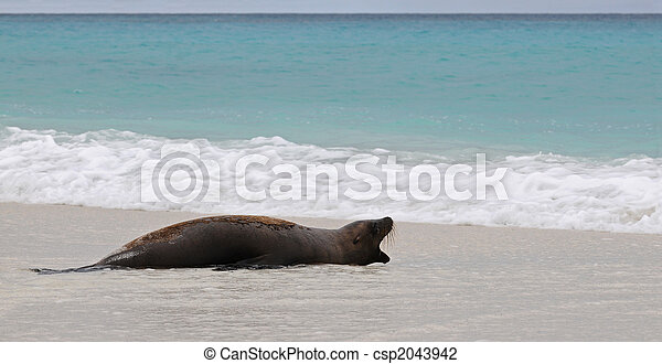 Lirón marino en la orilla - csp2043942