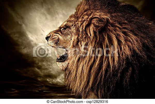 león, rugido, cielo, contra, tempestuoso - csp12829316