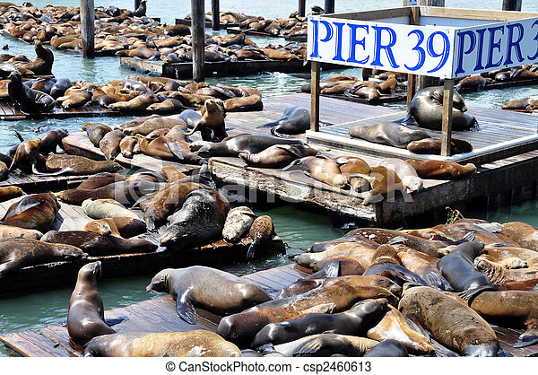 leões, mar - csp2460613