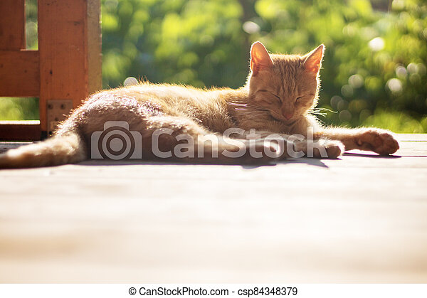 ležící, šmrc devítiocasá kočka, mimo, terasa, ostatní - csp84348379