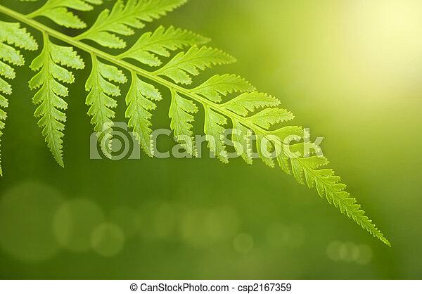 leaf., πράσινο  - csp2167359