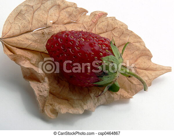 leaf and berry - csp0464867