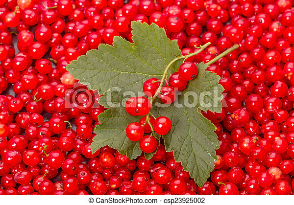 Leaf and berry red currant - csp23925002