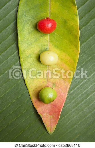 Leaf and Berry Still Life - csp2668110