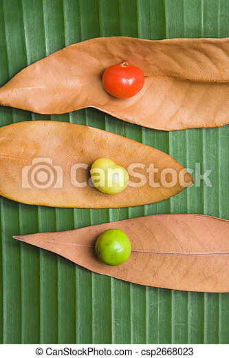 Leaf and Berry Still Life - csp2668023
