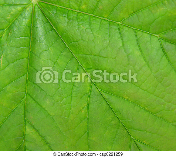 Leaf background - csp0221259