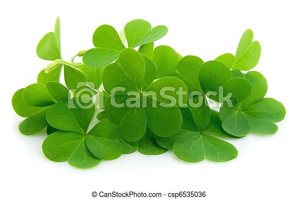 leaf clover - csp6535036
