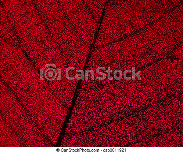 Leaf Detail - csp0011921