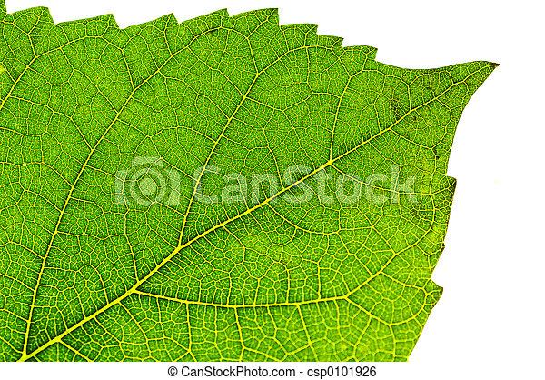 Leaf Detail - csp0101926