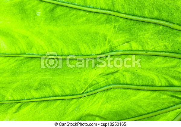 Leaf detail - csp10250165