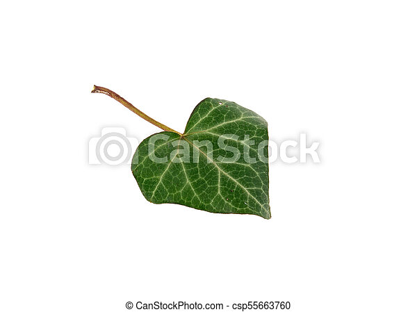 leaf green heart isolated on white background - csp55663760