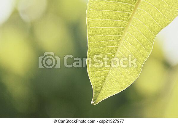 Leaf in nature - csp21327977