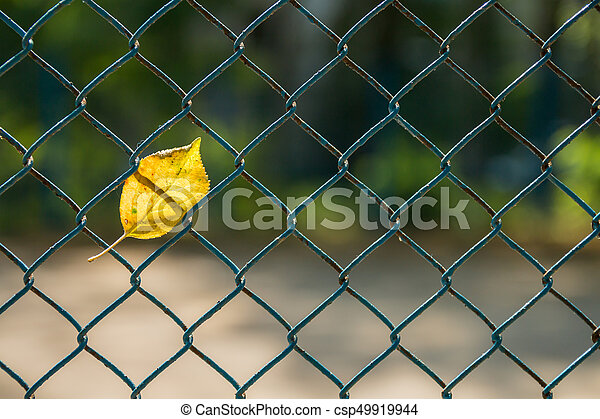 leaf in the grid fence autumn leaf in the grid fence