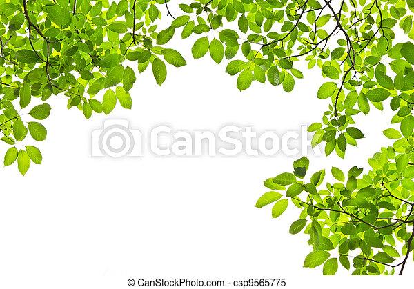 leaf isolated on white background - csp9565775