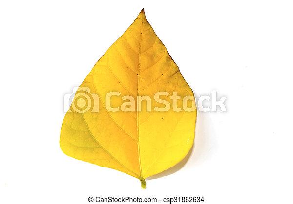 leaf isolated on white background - csp31862634