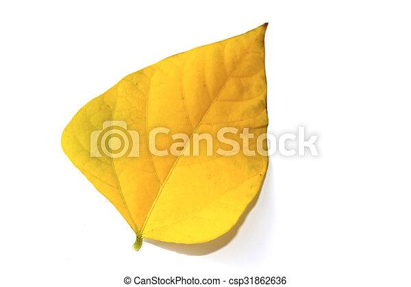 leaf isolated on white background - csp31862636