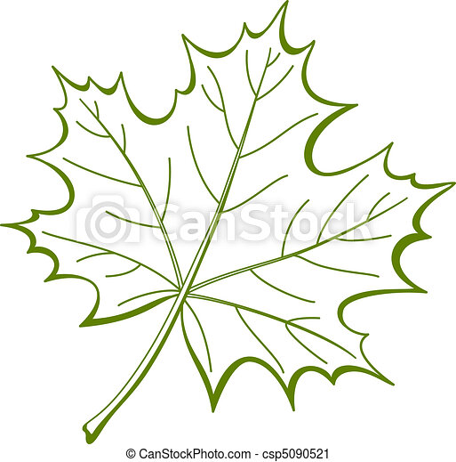 Leaf of a maple, vector - csp5090521