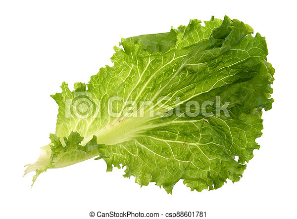 Leaf of lettuce on a white background - csp88601781