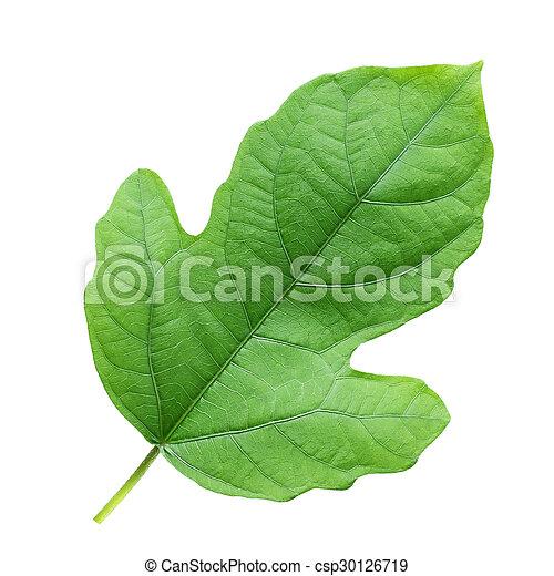 Leaf on a white background - csp30126719