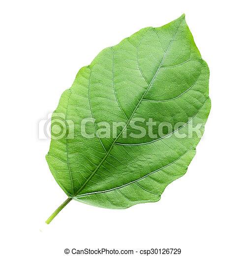 Leaf on a white background - csp30126729