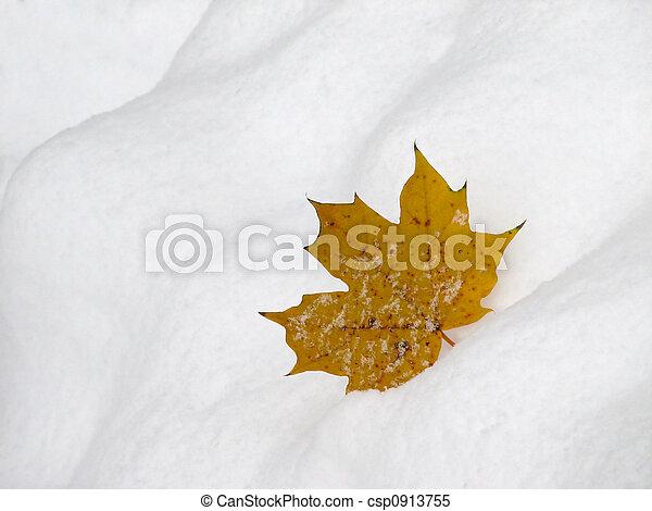 Leaf on snow 2 - csp0913755
