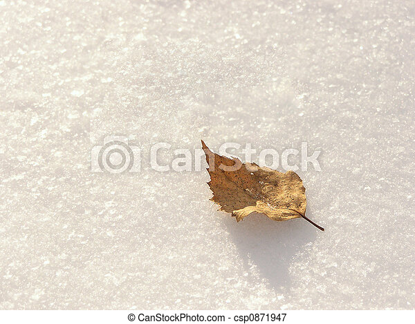 Leaf on snow - csp0871947
