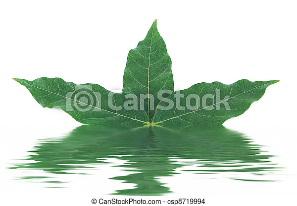 Leaf on the white background - csp8719994