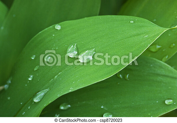 Leaf on the white background - csp8720023