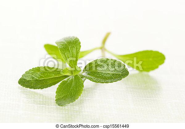 leaf , stevia, azúcar